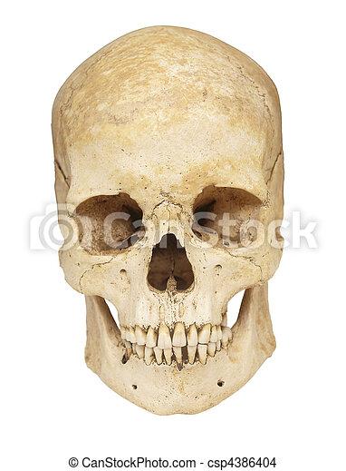 skeleton skull bones - csp4386404