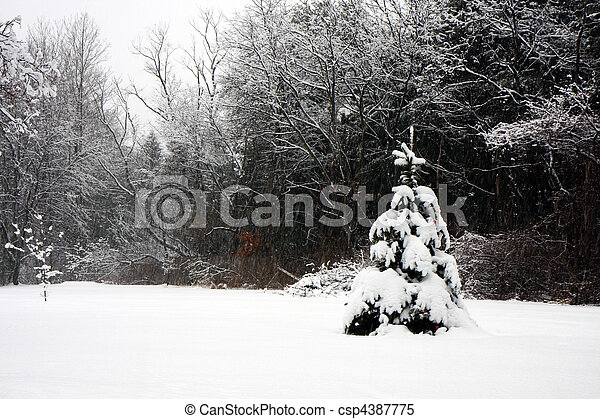 Trees in a snowy forest - csp4387775