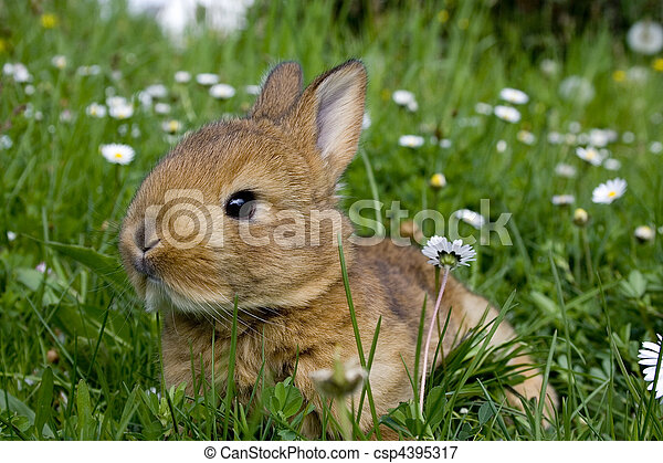 復活節, 兔子 - csp4395317