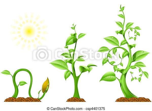 Stock de Ilustrationes de planta, Crecimiento - tres, fases ...
