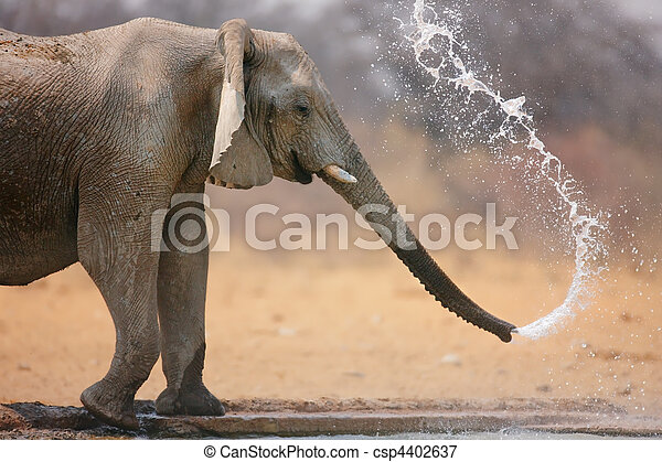 Elephant throwing water - csp4402637