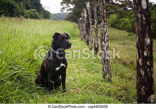 Watchful dog - csp4403436