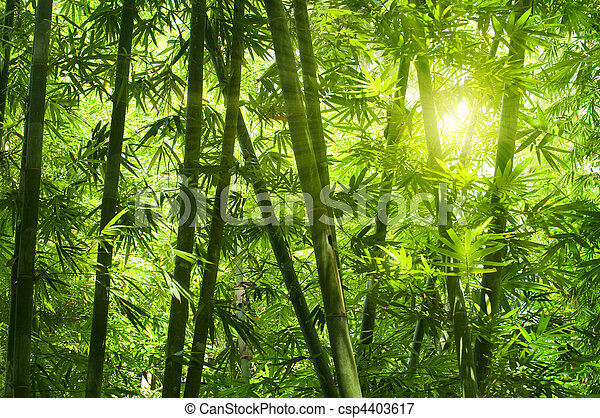 Bamboo forest.  - csp4403617