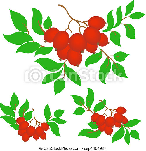set of three bunches of rowan - csp4404927