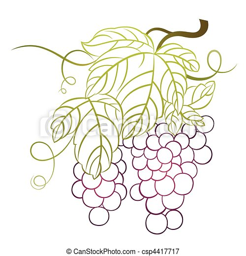 grape - csp4417717