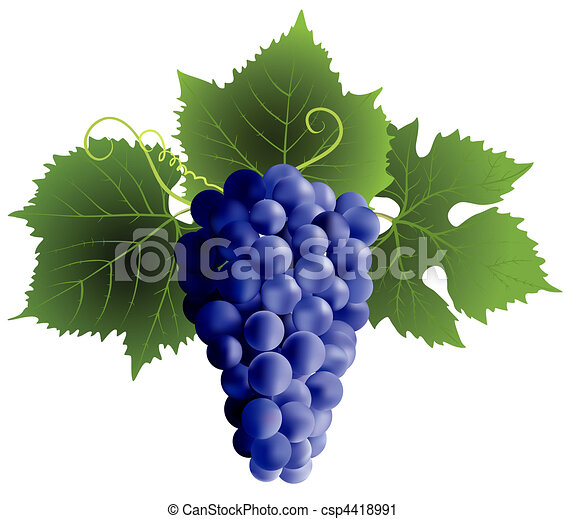 grape - csp4418991