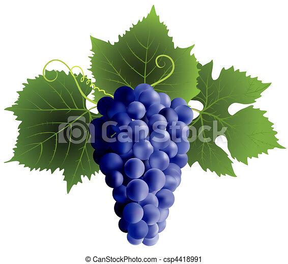 grape - csp4418991