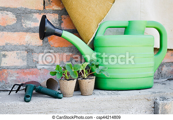 Strawberry Plants and Seedlings With Gardening Tools. Concept Gardening and Agriculture. Selective Focus.