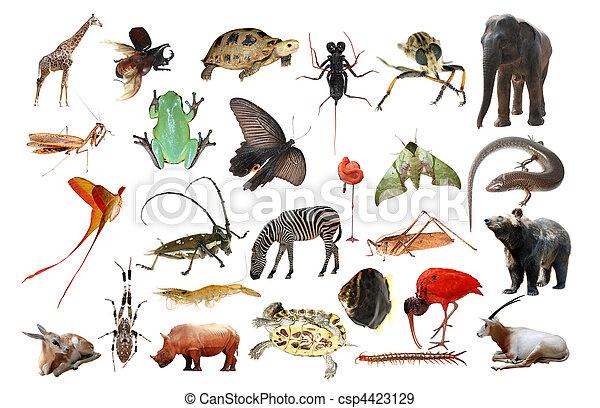 野生 動物, コレクション, 隔離された - csp4423129