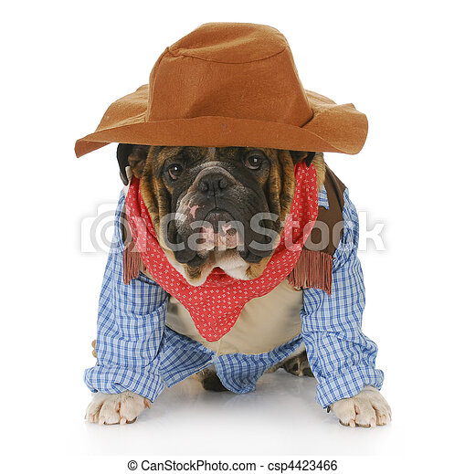 dog dressed up like a cowboy - csp4423466
