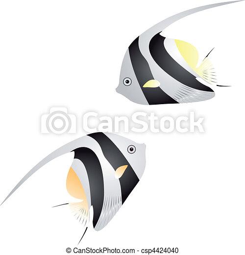 Angelfish vector - csp4424040