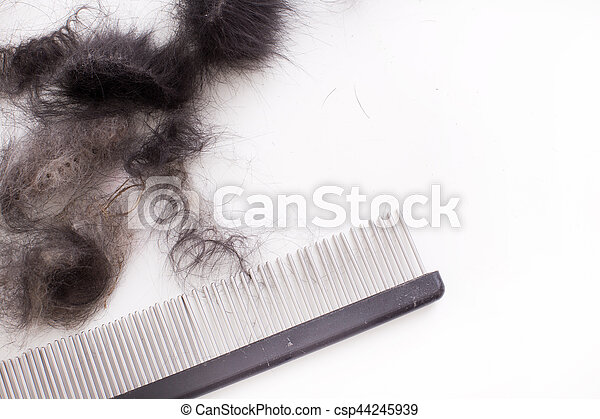 Grooming equipment for dogs with black animal hair isolated on white background