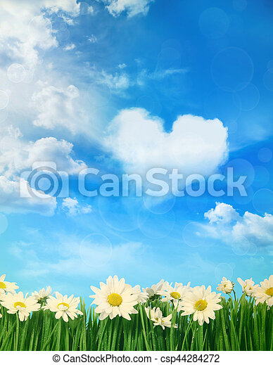 White daisies with puffy clouds in background - csp44284272