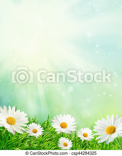 Spring meadow with daisies - csp44284325