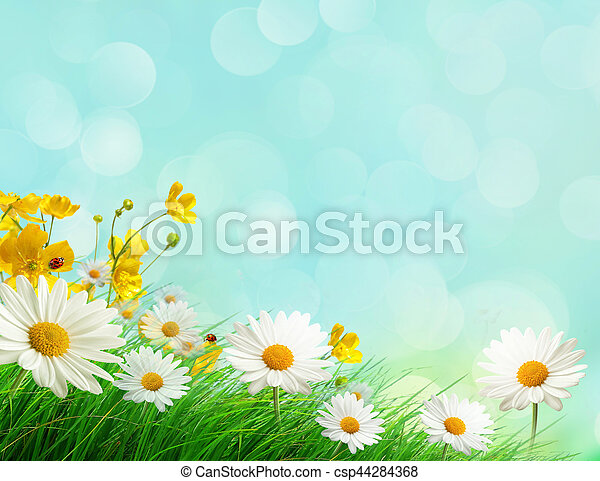 Spring meadow with wild flowers - csp44284368