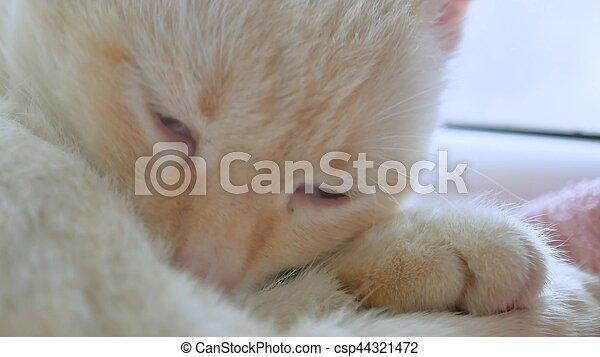white cat licks clean hair, pet lying on windowsill at the window