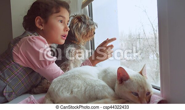 girl teen and pets cat and dog looking out the window, cat pet sleeps