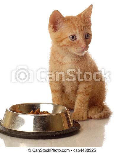 orange tabby kitten sitting beside the food bowl - seven weeks old    - csp4438325