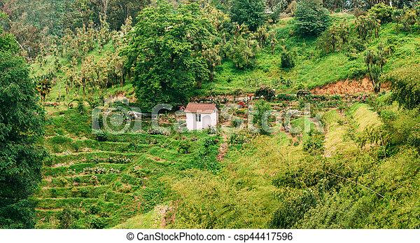 banque de photographies de été, jardin, rose, coteau, plantation