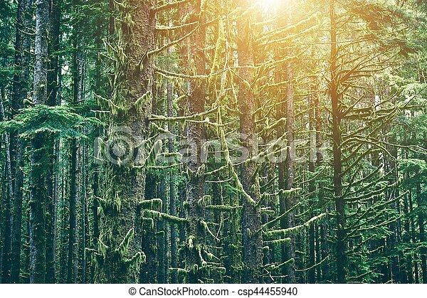 Mossy Northwest Forest - csp44455940