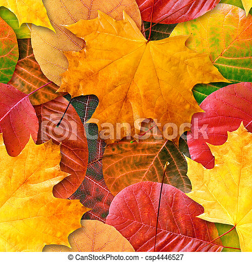 Fall leafs seamless background. - csp4446527