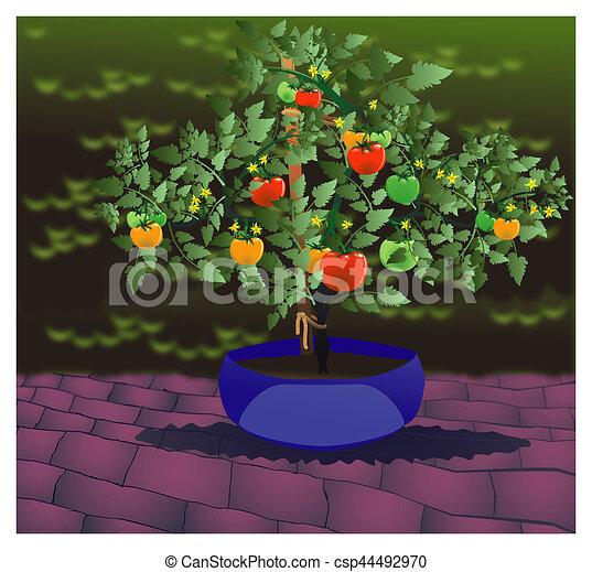 Classic Tomato Plant Extra - csp44492970