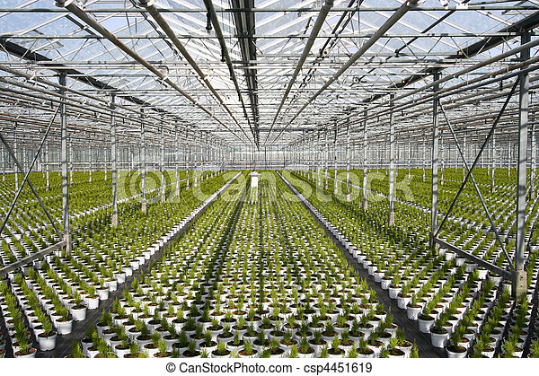 Greenhouse Conifers - csp4451619