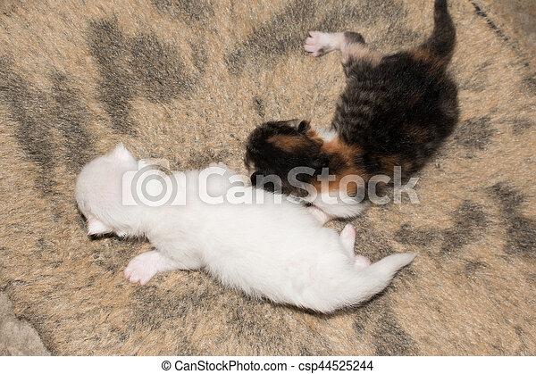 Cute kitty cat on carpet
