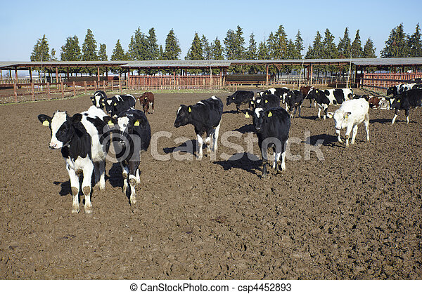 granja, Agricultura, leche, vaca, bovino - csp4452893