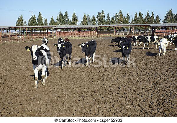 cow farm agriculture bovine milk - csp4452983