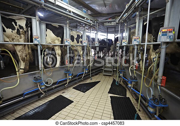 cow farm agriculture milk automatic milking system - csp4457083