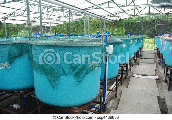 bauernhof, landwirtschaft, aquakultur - csp4468856