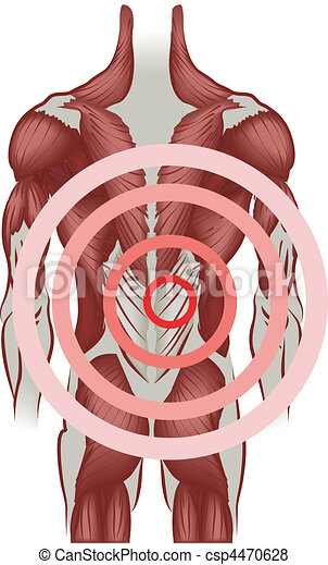 illustration of the human back muscles - csp4470628