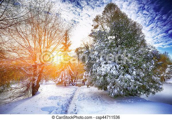 Sunlight breaks through the pine trees in winter - csp44711536