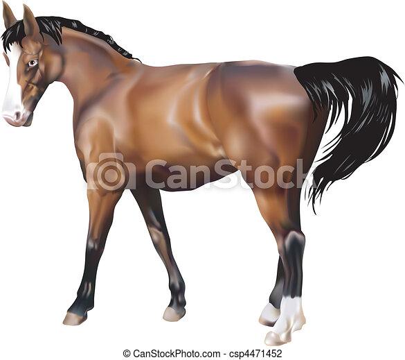 horse Illustration - csp4471452