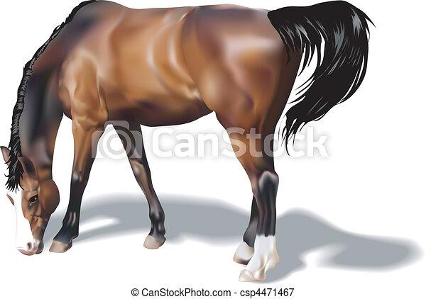 Horse Illustration - csp4471467