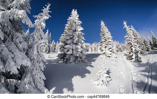 Snowy fir trees and blue sky in beautiful winter forest. Fisheye lens. Great Fatra mountains, Slovakia