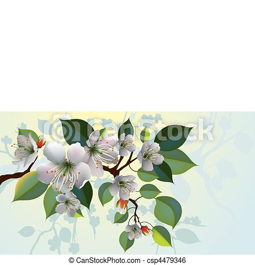 vector apple blossoms - csp4479346