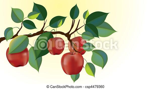 red delicious apple branch vector - csp4479360