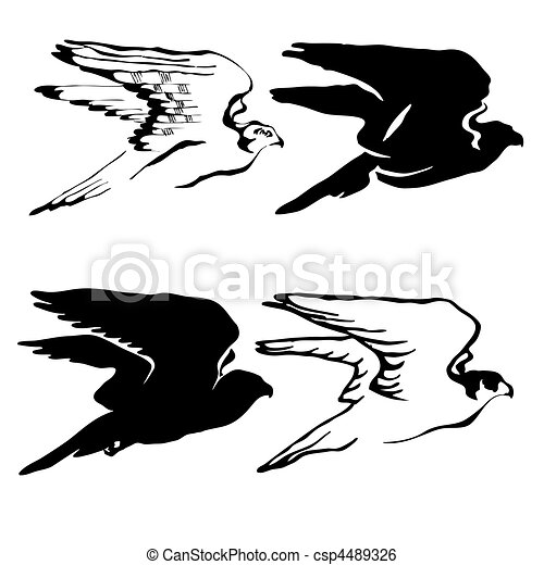 vector drawing of the hawk on white background - csp4489326