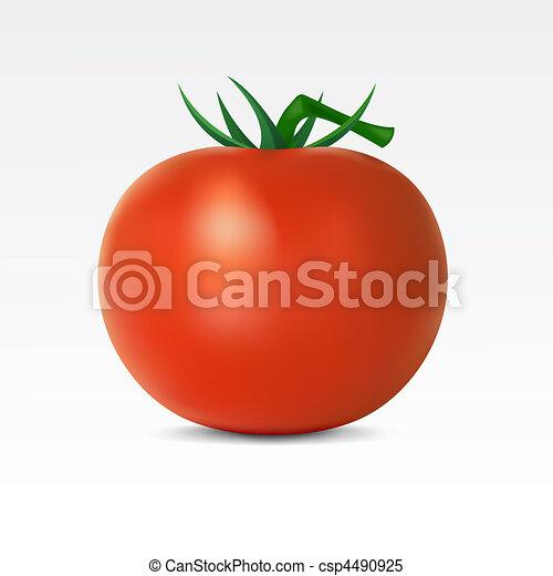 Tomato - csp4490925