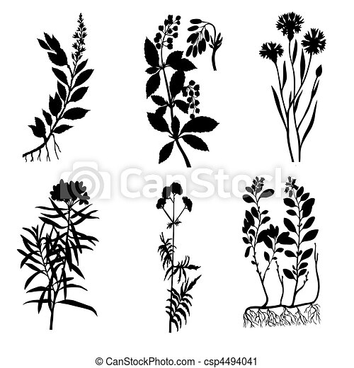 vector silhouettes of the medicinal plants on white background - csp4494041