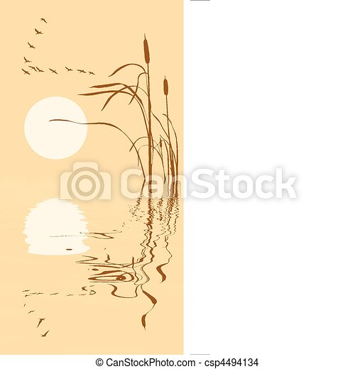 drawing flock geese on bulrush - csp4494134