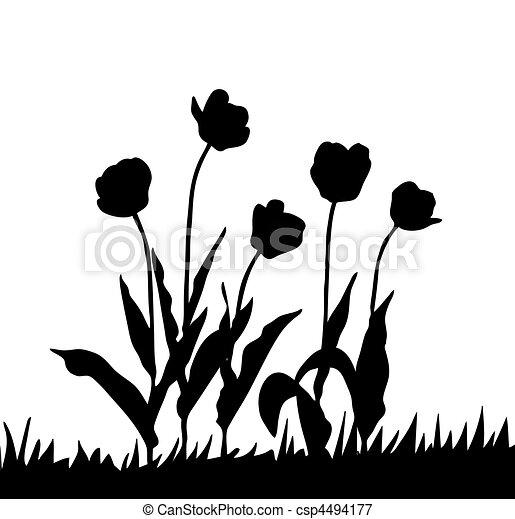 vector drawing tulip on white background - csp4494177