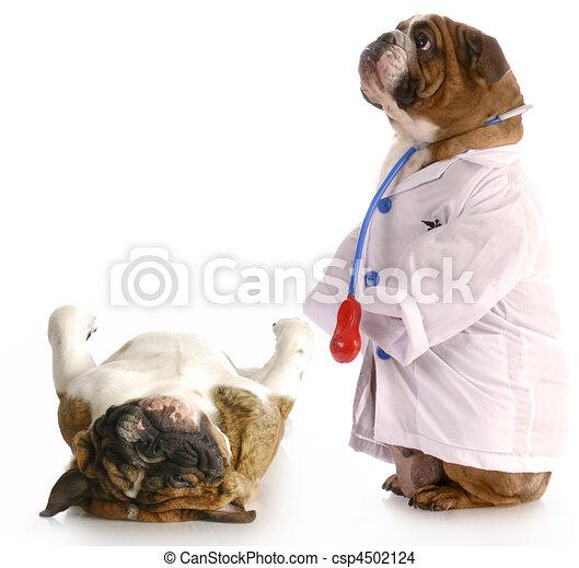 veterinary care - csp4502124