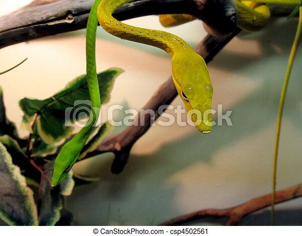 Thin snakes - csp4502561
