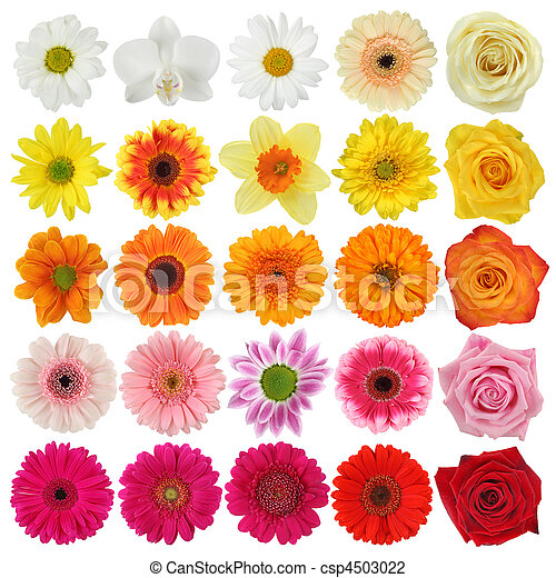 Flower collection  - csp4503022