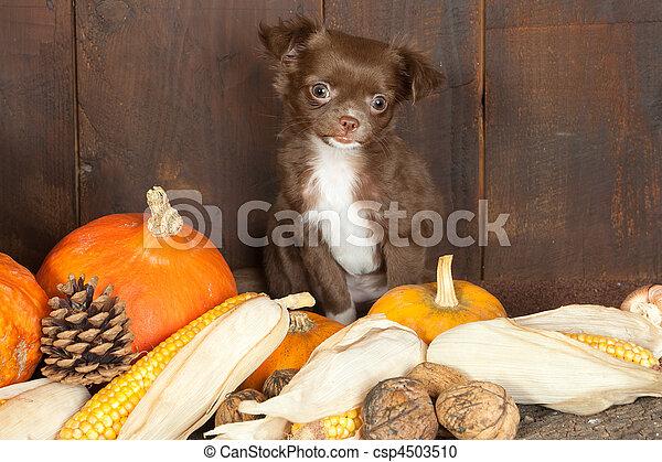 Halloween doggy - csp4503510