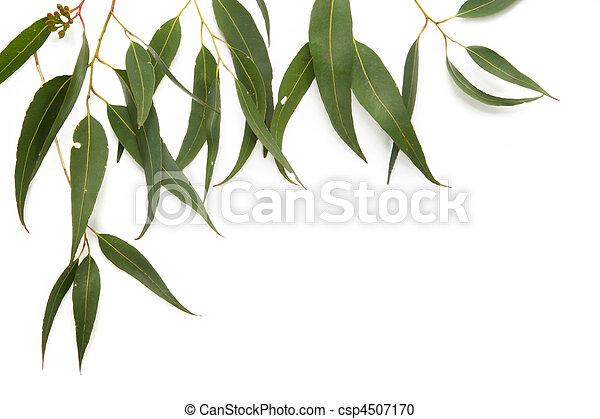 Gum Leaf Border - csp4507170