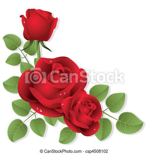 Roses - csp4508102